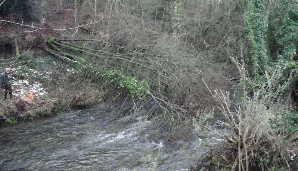 Rivière avant nettoyage